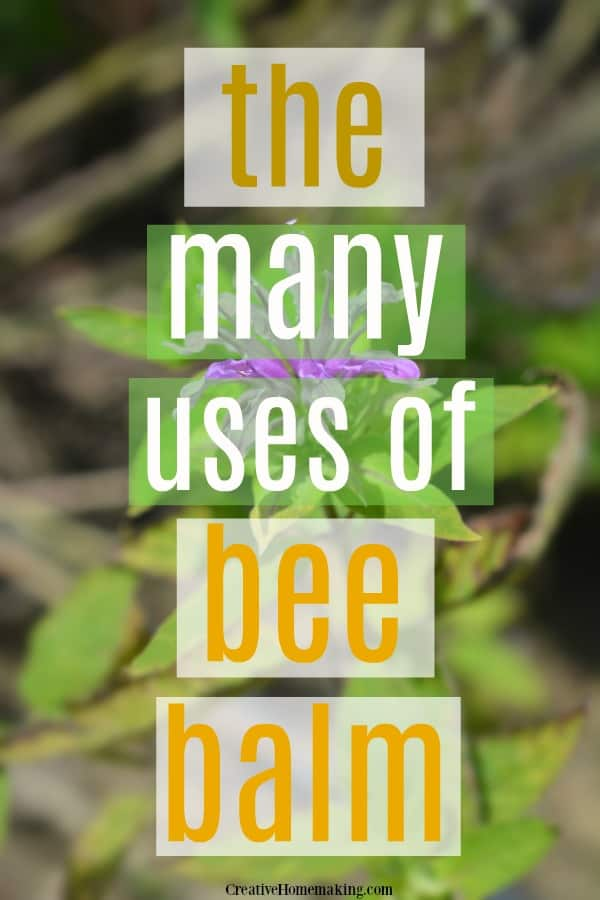 The many uses of bee balm, a favorite outdoor herb.