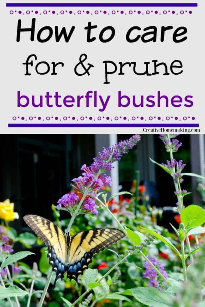 Easy tips for caring for and pruning butterfly bushes.