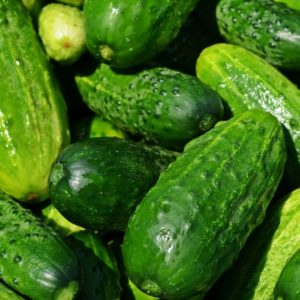 How to grow cucumbers in your garden.