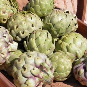 Easy tips for growing artichokes. Artichoke planting and care.