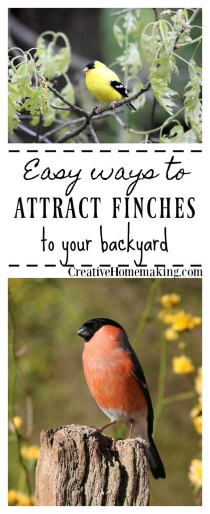 Easy tips for attracting finches to your backyard.