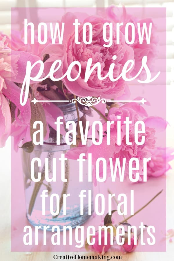 How to plant, grow, and care for peonies, a perennial flower used in floral arrangements. A favorite cut flower for flower arrangements.