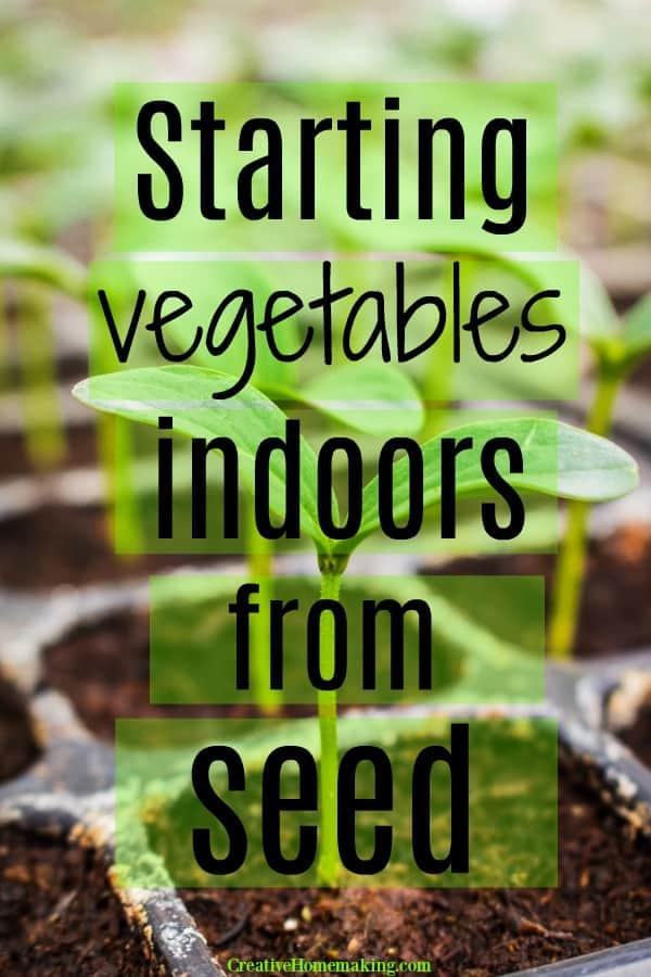 Growing vegetable seedlings indoors in spring