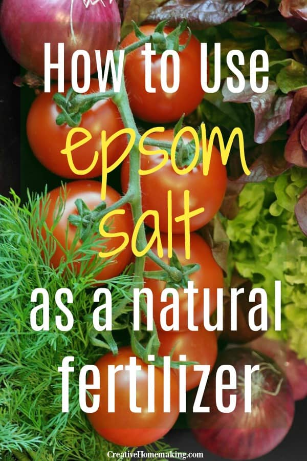 How often should you put epsom salt on tomatoes and other plants? Does epsom salt kill plants? These common gardening questions answered and more!