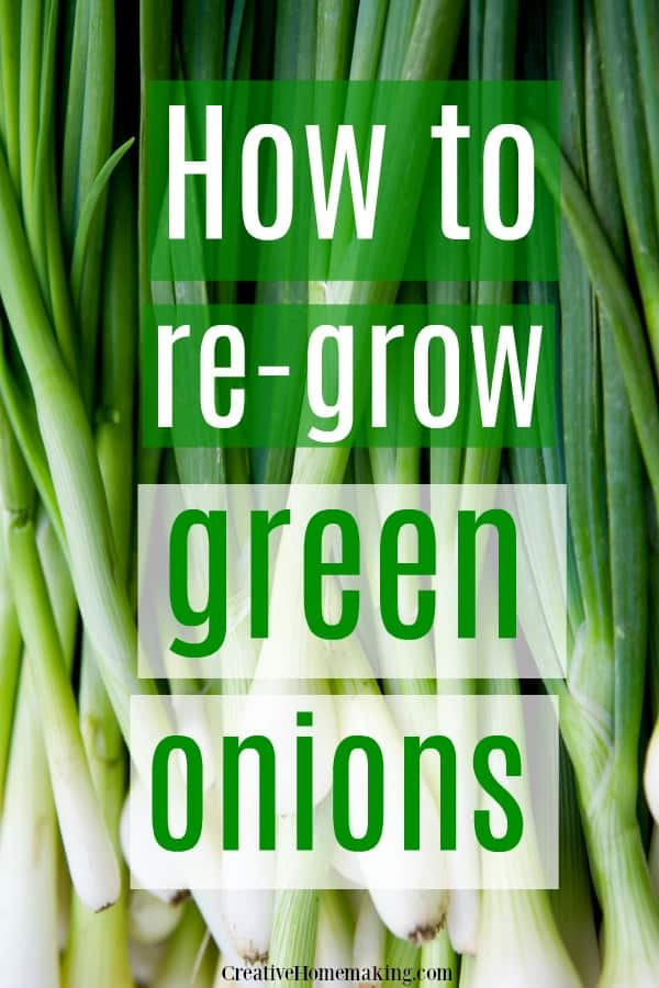 How to re-grow green onions indoors in a glass of water.