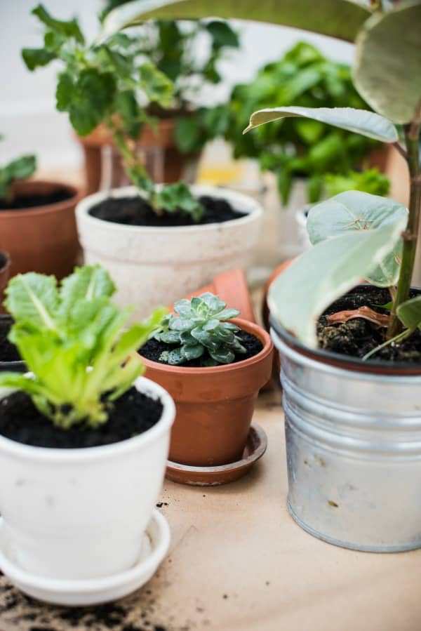 How to make your own plant food. Easy homemade natural fertilizer for house plants.