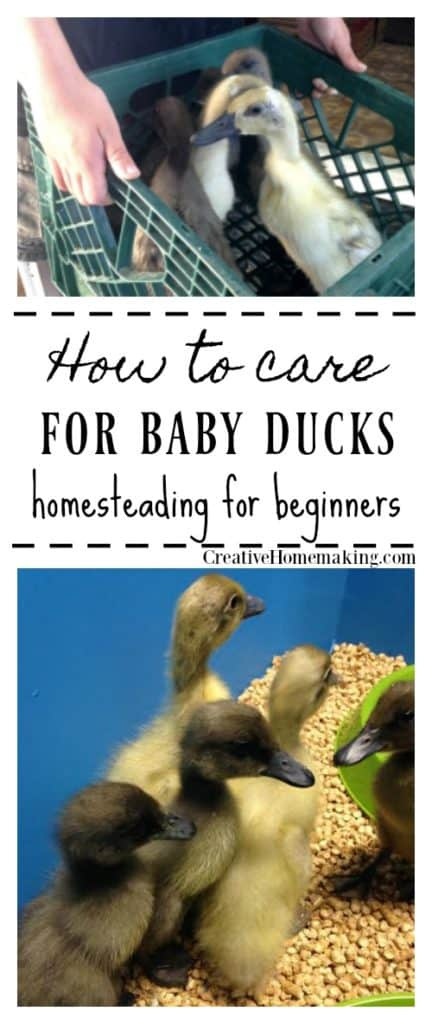 Tips for taking care of baby ducks. Easy homesteading for beginners.