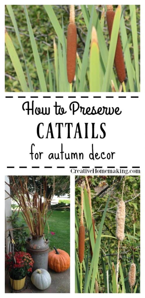 Step-by-step instructions for preserving cattails to display with your fall or autumn decor.