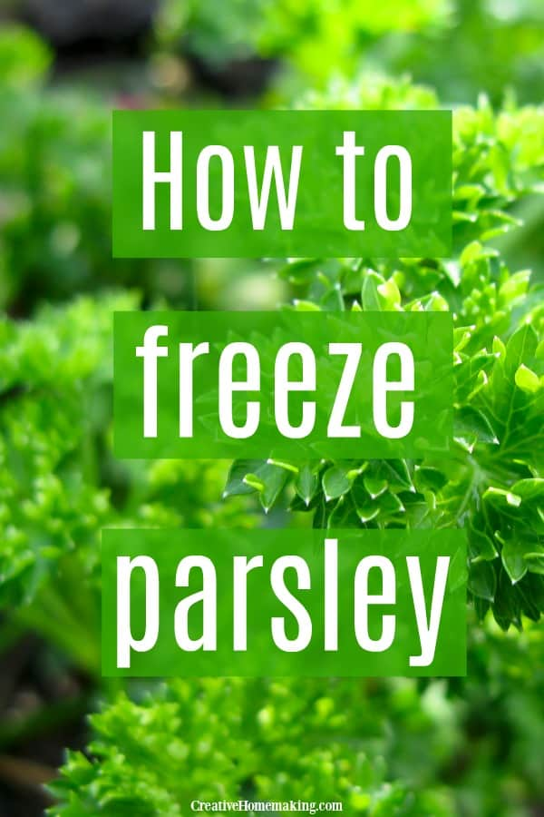 Several methods to freeze parsley from your garden, including freezing it in olive oil and how to make parsley logs to freeze.