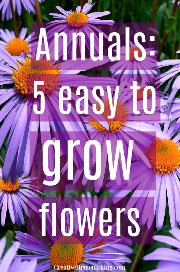 Growing annuals. Five easy to grow annual flowers to plant in your garden this year.