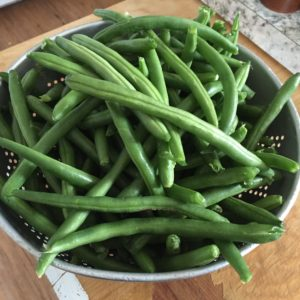 Canning green beans. How to can green beans from the garden. Step by step pressure canning for beginners.