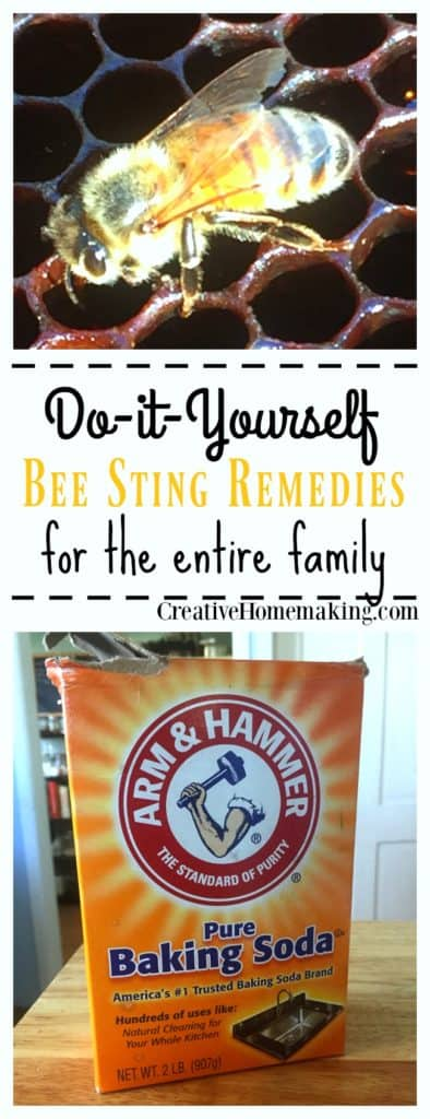 Stung by a bee or wasp? Try one of these proven bee sting remedies. They really work!