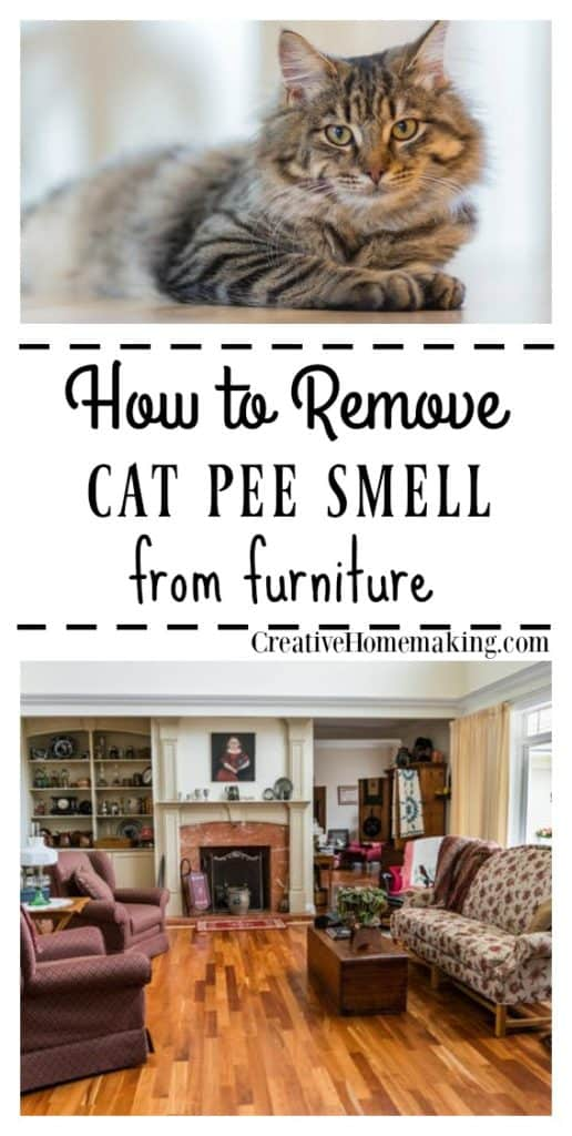 Expert cleaning tips for getting cat urine or pee smell out of furniture.