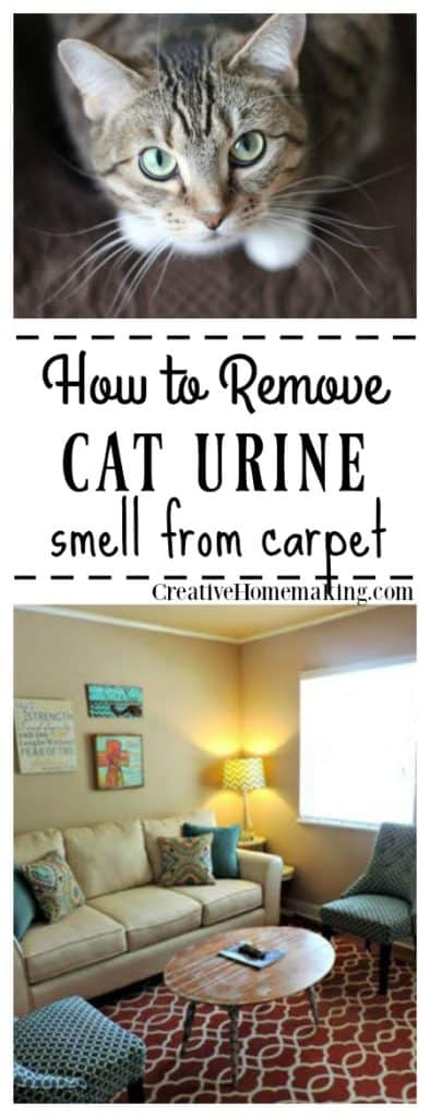 Wondering what products work best for removing cat urine smell from your carpet? Get rid of that awful lingering pee smell for GOOD with these expert tips.