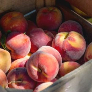 Freestone vs. clingstone peaches. Do you know which peaches are better for baking or canning?