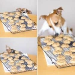 Eight easy, healthy dog treats and biscuits you can make yourself at home.