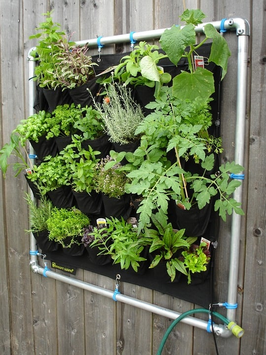 Easy DIY herb garden you can make from a shoe organizer.
