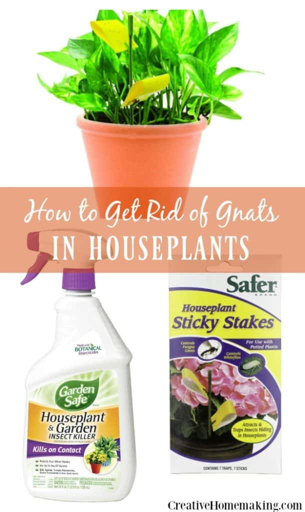 How To Get Rid Of Gnats In House Plants Creative Homemaking
