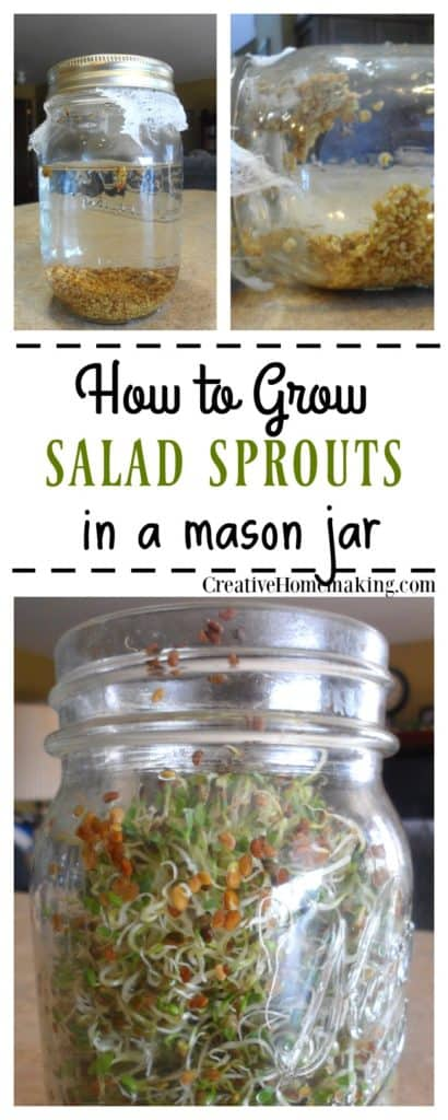 How to grow sprouts in a mason jar. Easy instructions for growing your own salad sprouts from seed in a mason jar on the kitchen counter.