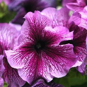 Growing annuals. Five easy to grow annual flowers to plant in your garden.