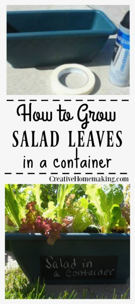 ow to grow salad leaves or lettuce in a container or pot. Just clip what you need to make salad and it grows back in a week!