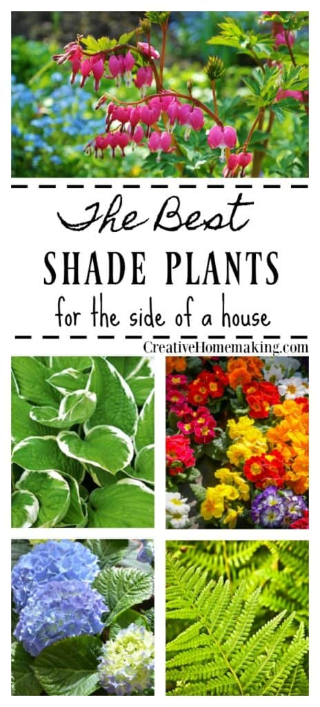 Best shade plants. A reader asks what shady plants and shrubs she can plant in a shady area of her yard.