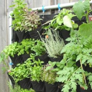 Creative ideas for doubling your gardening space by the use of vertical gardens.
