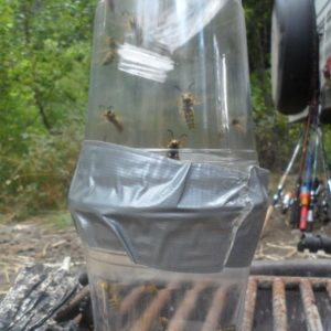 How to make an effective DIY wasp trap in 5 minutes or less with plastic drinking cups, a water bottle, and duck tape.