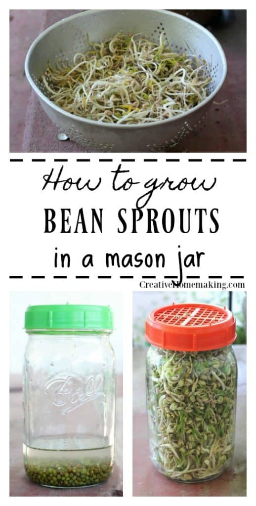Easy tips for getting started growing bean sprouts in jars. Grow your own mung bean sprouts for Chinese and Asian cooking, and more.