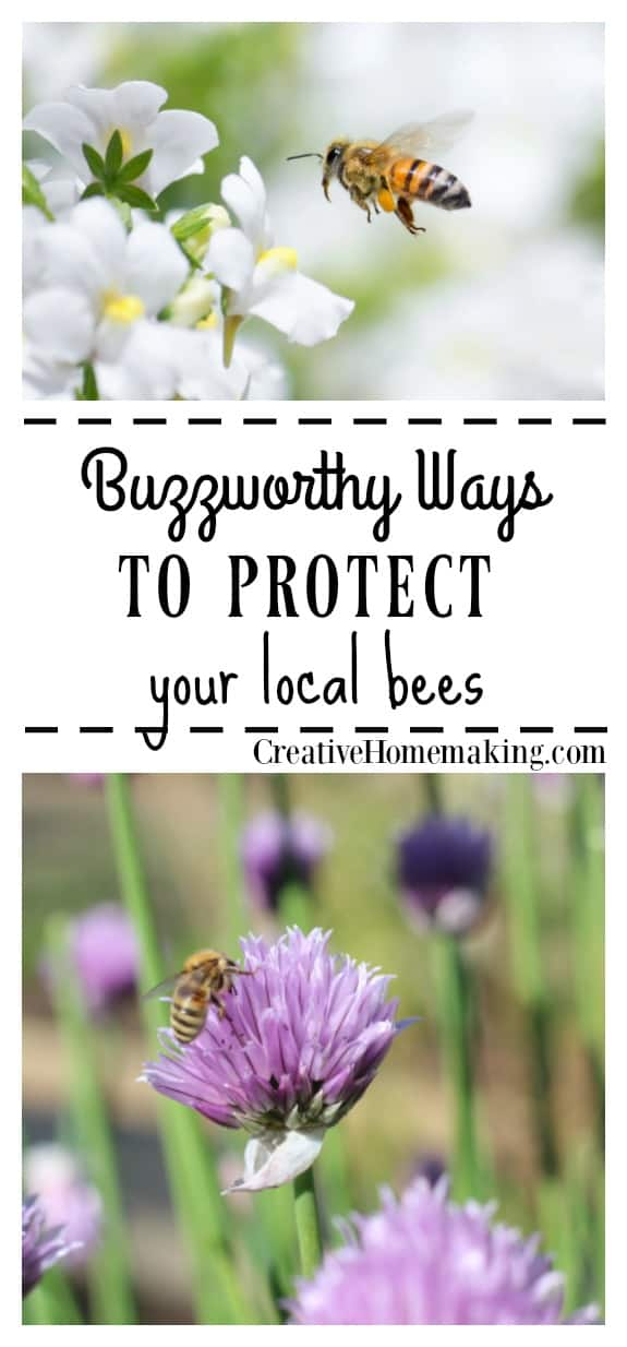 Top 4 ways to help protect the bee population both near your home and in your surrounding community. Do your part to help the bees!