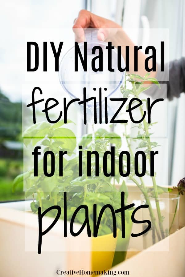 Easy natural fertilizers to make for your houseplants and indoor plants.