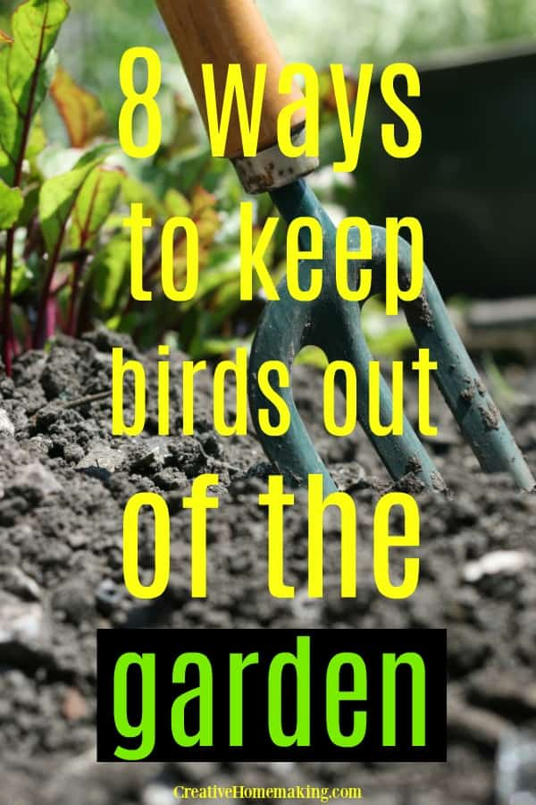 Easy DIY tips for keeping birds out of the garden. Ideas for keeping birds from eating your strawberries!