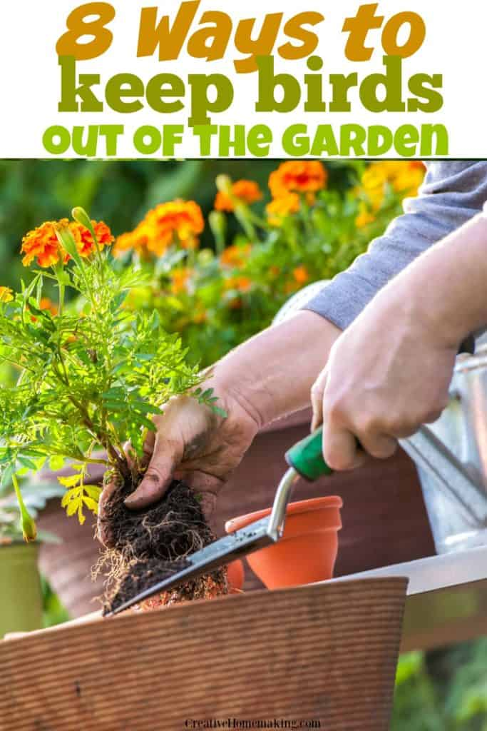 8 Ways To Keep Birds Out Of The Garden Creative Homemaking