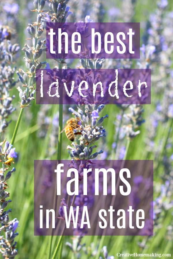 Comprehensive list of lavender farms in Washington State, including farms in both eastern and western Washington.