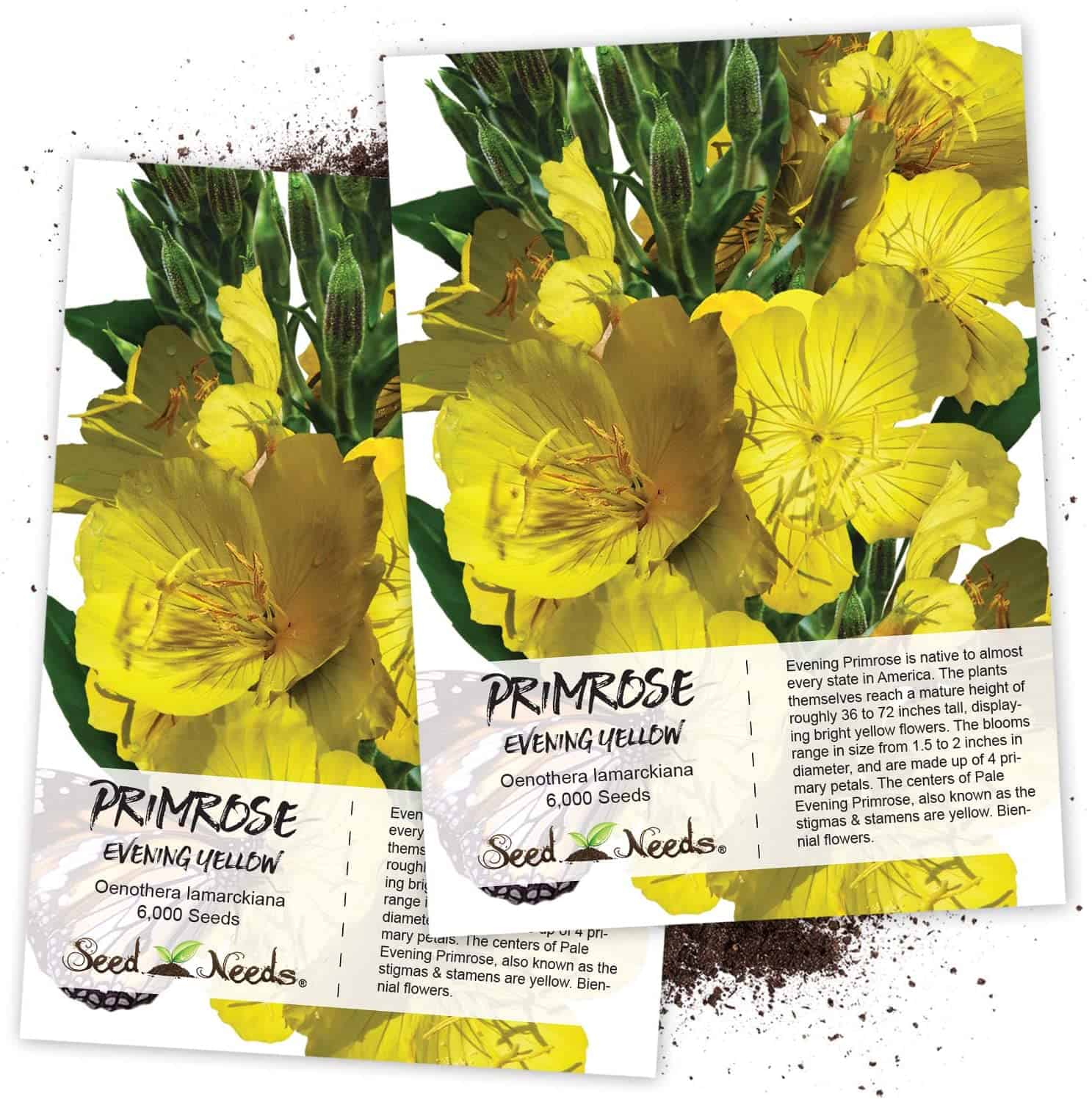 Evening Primrose (Oenothera lamarckiana) Twin Pack of 6,000 Seeds Each
