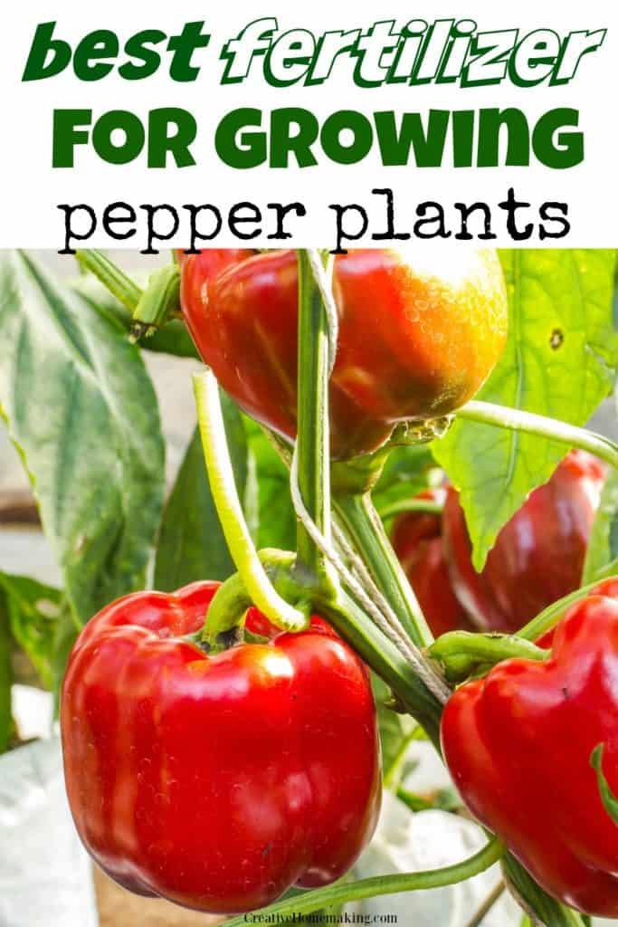 The best fertilizer for growing peppers in your garden or growing peppers in pots.