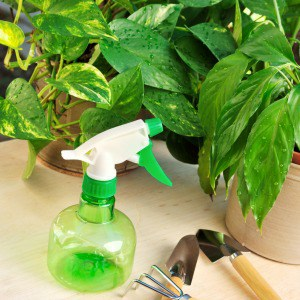 The best organic fertilizers for houseplants. Plant food for indoor plants.